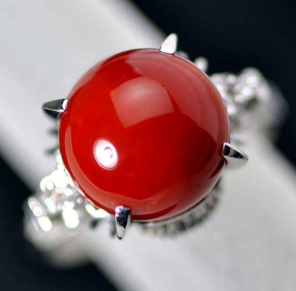 血赤サンゴリング 01